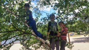 Blog Camping Kids in a tree